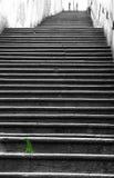 Ciuffo verde di erba lungo le scale lunghe Fotografia Stock Libera da Diritti
