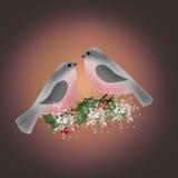 Ciuffolotto sul ramo della cartolina di Natale del greetig dell'agrifoglio Immagine Stock Libera da Diritti