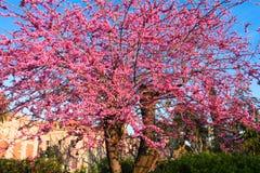 Ciutadella Park. Barcelona Royalty Free Stock Image