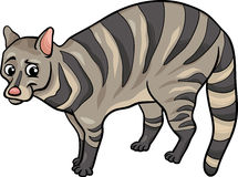 Civet animal cartoon illustration Stock Image