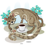 Civet Coffee Kopi Luwak Royalty Free Stock Image