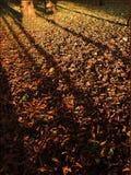 Civière de forêt Photographie stock