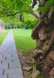 Civil War Era Tree Is Ancient stock photos