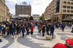 Civilians protesting the violence towards to street dogs,  solid. Skopje, Macedonia - April 9, 2017: Civilians protesting the violence towards to street dogs Royalty Free Stock Photo