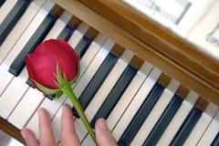 Clés de piano, Rose et main femelle Photo stock