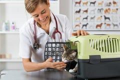 Clínica veterinária Fotos de Stock