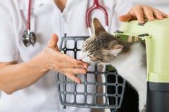 Clínica veterinária Foto de Stock Royalty Free