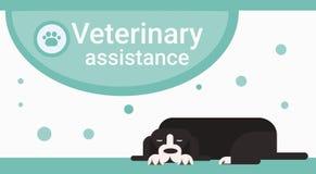 Clínica veterinária do auxílio para a bandeira do serviço do veterinário dos animais de estimação dos animais ilustração stock