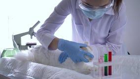 Clínica veterinaria, especialista en animal de la investigación de la máscara en la tabla en laboratorio moderno almacen de metraje de vídeo