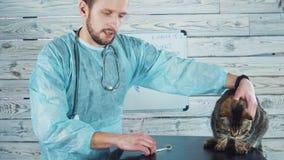 Clínica veterinaria Gato lindo durante el examen de un veterinario Taller veterinario almacen de metraje de vídeo