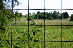 Clôturé dedans Photographie stock libre de droits