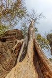 Clôture endommagée, merci temple de Prohm, Angkor Thom, Siem Reap, Cambodge Photo stock