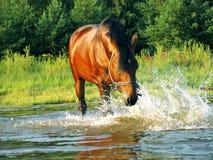 Éclaboussement du cheval Photographie stock