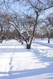 clad snowtree Arkivfoton