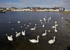 Claddagh Basin Royalty Free Stock Photos