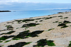 Claigan Coral Beach. The Coral Beaches on the shores of Loch Dunvegan near Claigan, Isle of Skye, Scotland Stock Photo