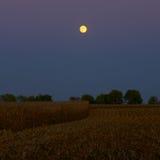 Clair de lune au temps de récolte Photo stock