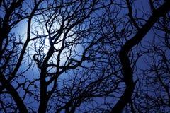 Clair de lune par des branchements d'un arbre Photographie stock