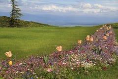 Clairière avec des Wildflowers Photo libre de droits