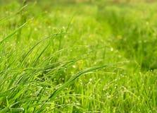 Clairière avec l'herbe Photos stock