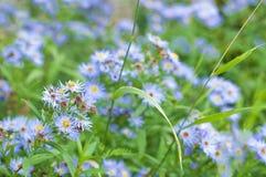 Clairière avec les fleurs bleues Photographie stock libre de droits