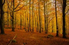 Clairière d'automne Images stock