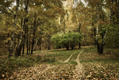 Clairière d'automne avec les arbres et la route Photos stock