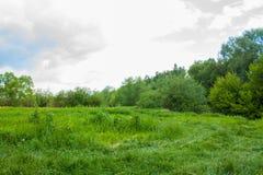 Clairière dans la forêt Photos stock