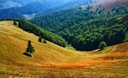 Clairière dans les montagnes Photos libres de droits