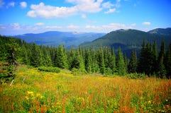 Clairière dans les montagnes Photos stock