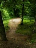 Clairière dans une forêt Images libres de droits