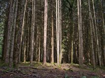 Clairière dans une forêt avec la belle lumière du soleil image libre de droits