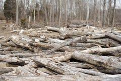 Clairière de bois de construction avec des bois à l'arrière-plan Images stock