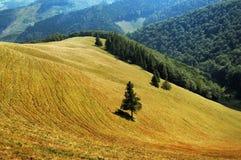 Clairière de Carpathiens Images libres de droits