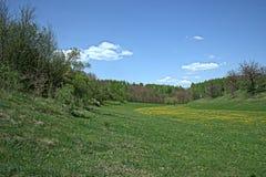 Clairière de floraison de forêt de ressort Image stock