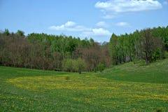 Clairière de floraison de forêt de ressort Photos stock