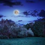 Clairière de forêt à l'ombre des arbres la nuit Photographie stock
