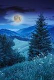 Clairière de forêt à l'ombre des arbres la nuit Photographie stock libre de droits