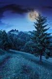 Clairière de forêt à l'ombre des arbres la nuit Images stock
