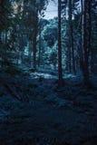 Clairière de forêt à l'ombre des arbres la nuit Images libres de droits