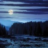 Clairière de forêt à l'ombre des arbres la nuit Image stock