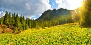 Clairière de forêt Photographie stock