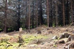 Clairière de forêt Photo libre de droits