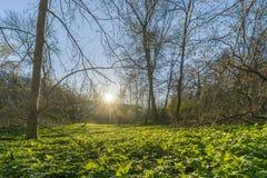 Clairière de forêt avec l'aîné moulu Photos libres de droits