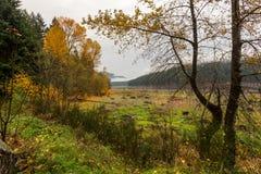 Clairière de forêt dans la chute photos stock
