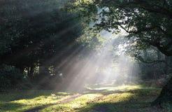 Clairière de forêt de brouillard de lumière du soleil photographie stock libre de droits