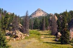Clairière de montagne sur Sunny Day avec des pins Image libre de droits