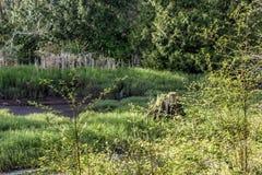 Clairière de rivière de tronçon d'arbre image libre de droits