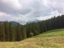 Clairière en montagnes image stock