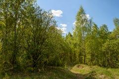 Clairière ensoleillée dans la forêt verte de ressort Photo stock